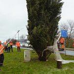 plaatsing kerstboom